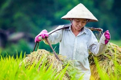 Photo du Vietnam agricole